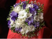 Beautiful high Spirited Freesia Flowers Bouquet (Seasonal Flowers)